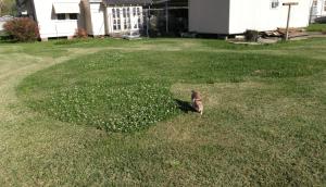 Grass cut in heart shape