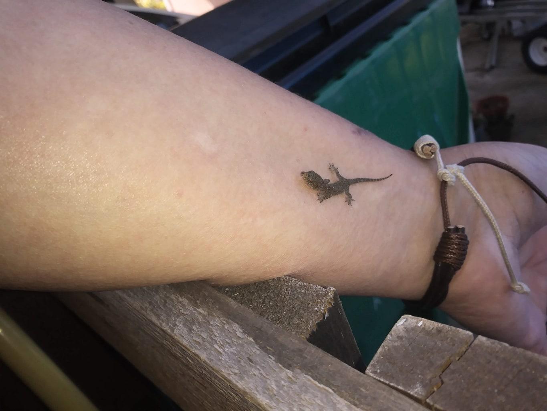 Little lizard looks like a tattoo